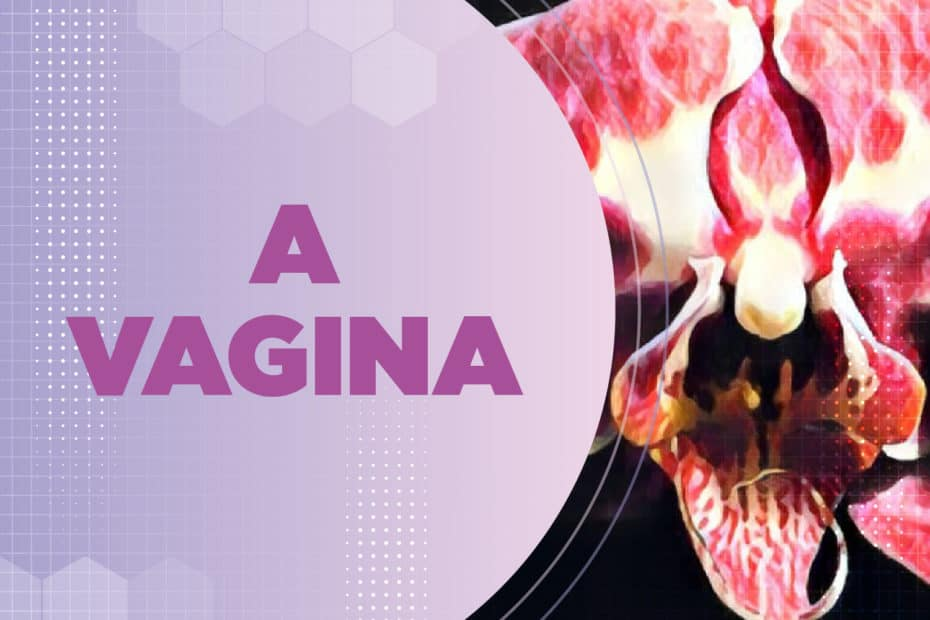 A vagina